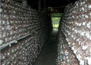 kỹ thuật trồng nấm rơm